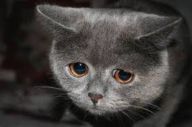 cat angst