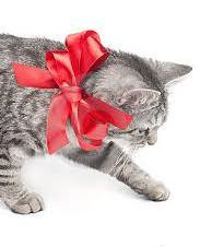 cat ribbon 2