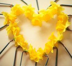 daffodil-heart